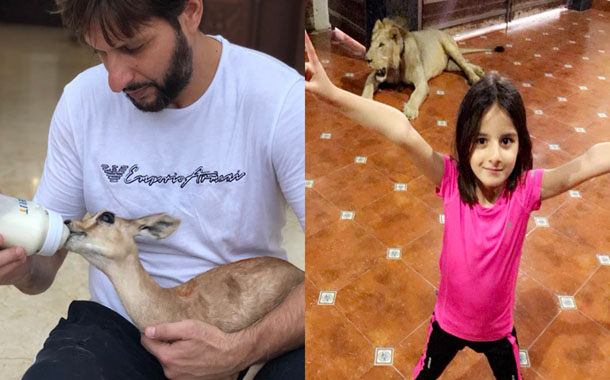 Afridi sparks social media outrage after sharing photo of chained lion