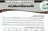 Forest Department Muzaffarabad has sought tenders from registered contractors for the extraction and export of valuable herbs